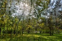 Jaskrawa jesień zamazywał krajobraz po deszczu przez mokrego nadokiennego szkła zdjęcie royalty free