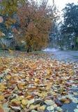 Jaskrawa jesień Obrazy Royalty Free