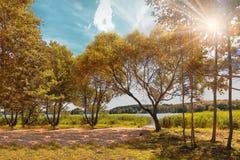 Jaskrawa kolorowa jesień Krajobraz kolorowa złota jesień na jaskrawym słonecznym dniu na jeziorze Obraz Royalty Free
