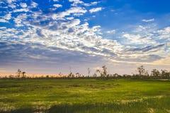 Jaskrawa krajobrazowa natura z niebieskim niebem, chmurą, zielonym drzewem i golem, Zdjęcie Royalty Free