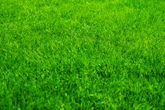 Jaskrawa, soczysta, zielona trawa, Gazonu teren Zdjęcia Royalty Free