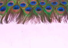Jaskrawa tekstura naturalni pawi piórka Obrazy Stock
