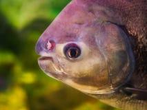Jaskrawa tropikalna ryba n zdjęcia royalty free