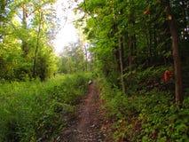 Jaskrawa Wąska Lasowa ścieżka Obrazy Royalty Free