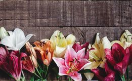 Jaskrawa wiosna kwitnie na nieociosanym tle Cześć wiosna Kobiety zdjęcie stock