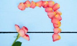 Jaskrawe róże na błękitnym drewnianym tle Fotografia Royalty Free