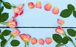 Jaskrawe róże na błękitnym drewnianym tle Obrazy Stock