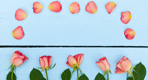Jaskrawe róże na błękitnym drewnianym tle Obraz Stock