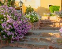 Jaskrawe różowe petunie przelewa się dalej kamienni kroki i droga przemian zdjęcie stock