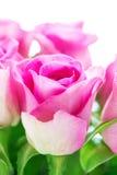 Jaskrawe różowe róże zdjęcia royalty free