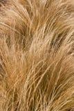 Jaskrawe trawy Obrazy Stock