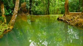 Jaskrawego colorfull naturalny basen w egzotycznego tropikalnego lasu deszczowego dżungli Tropikalnym krajobrazie zbiory