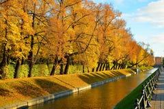 Jaskrawi żółci drzewa w lecie Uprawiają ogródek na banku łabędź Zdjęcia Stock