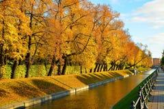 Jaskrawi żółci drzewa zaświecający słońcem w lecie Uprawiają ogródek na b Obrazy Stock