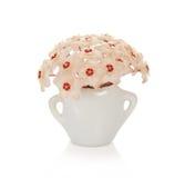 Jaskrawi asteryski wosku bluszcz w małej wazie Zdjęcie Royalty Free