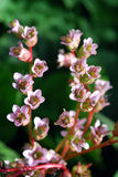 Jaskrawi błękitów kwiaty zdjęcie stock