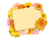jaskrawi barwioni gerbera kwiaty i prześcieradło papier Fotografia Stock