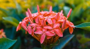 Jaskrawi czerwień kwiaty i mnóstwo greenery zdjęcie stock