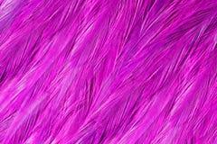 Jaskrawi czerwoni flamingów ptaki Flamingów piórka Obrazy Stock