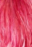 Jaskrawi czerwoni flamingów ptaki Flamingów piórka Zdjęcie Royalty Free