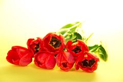 Jaskrawi czerwoni tulipany zdjęcie royalty free