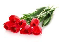 Jaskrawi czerwoni tulipany obraz royalty free