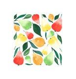 Jaskrawi dojrzali soczyści bonkrety pomarańcze zieleni koloru żółtego i czerwieni kolory z zieleń liśćmi w kwadratowej akwareli Fotografia Stock