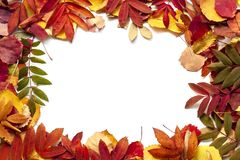 Jaskrawi jesień liście jako tło Odizolowywający na bielu zdjęcia royalty free