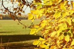Jaskrawi jesień liście na gałąź obraz royalty free