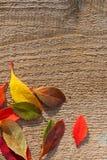 Jaskrawi jesień liście na Szorstkim drewnie Obraz Royalty Free