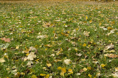 Jaskrawi jesień liście na zielonej trawie Fotografia Stock