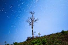 Jaskrawi Joshua drzewa gwiazdy ślada, gwiazda ślada i mknąca gwiazda nad drzewami, Obraz Royalty Free