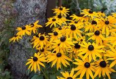 Jaskrawi kolor żółty kwiaty Zdjęcia Stock
