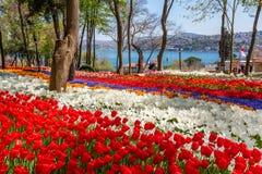 Jaskrawi kolorowi tulipanowi kwiatów łóżka w tulipanowym festiwalu Emirgan parku, Istanbuł, Turcja fotografia stock