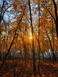Jaskrawi kolory jesień las zdjęcia stock
