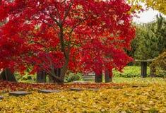 Jaskrawi kolory jesieni drzewa Obrazy Royalty Free
