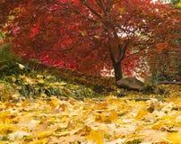 Jaskrawi kolory jesieni drzewa Obraz Stock