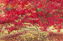 Jaskrawi kolory jesieni drzewa Zdjęcia Royalty Free