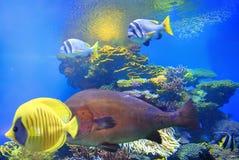 Jaskrawi kolory korale Eilat Izrael Obrazy Stock