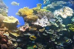 Jaskrawi kolory korale Eilat Izrael Zdjęcia Stock