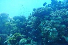 Jaskrawi kolory korale Eilat Izrael Zdjęcie Royalty Free