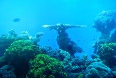 Jaskrawi kolory korale Eilat Izrael Obraz Stock