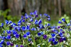 Jaskrawi kolory kwiaty w wiosna lesie Zdjęcie Royalty Free