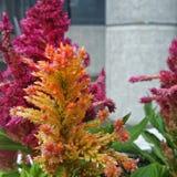 Jaskrawi kwiaty Fotografia Royalty Free