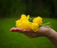 Jaskrawi lasów kwiaty Zdjęcia Royalty Free