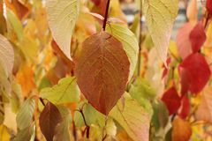 Jaskrawi piękni jesień liście - kolorowy jesieni tło Fotografia Stock