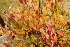 Jaskrawi piękni jesień liście - kolorowy jesieni tło Fotografia Royalty Free