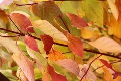 Jaskrawi piękni jesień liście - kolorowy jesieni tło Zdjęcia Stock