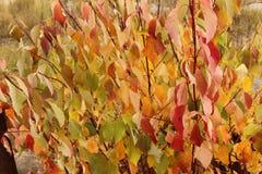 Jaskrawi piękni jesień liście - kolorowy jesieni tło Obrazy Stock