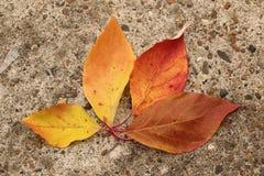 Jaskrawi piękni jesień liście na betonowym tle Obraz Stock